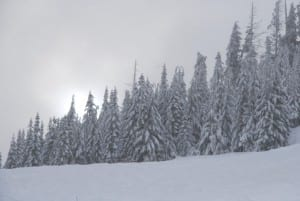 Mount Seymour scenery