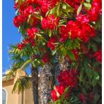 Blumenpracht in Ascona