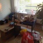 Neue Wohnung - das Wohnzimmer