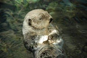 Otter_Oceanarium
