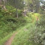 Waldweg: Gnomen-Stimmung