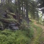 Waldweg bei Gspon