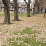 Blätterwahn