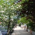 Spring in NewYork