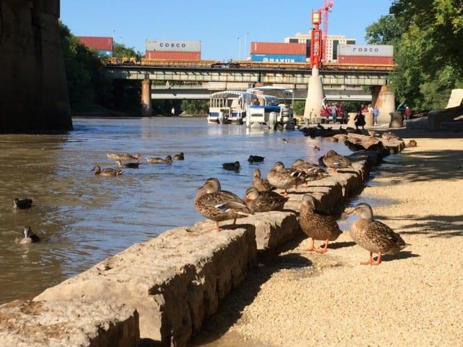 Winnipegs Fluss-Idylle