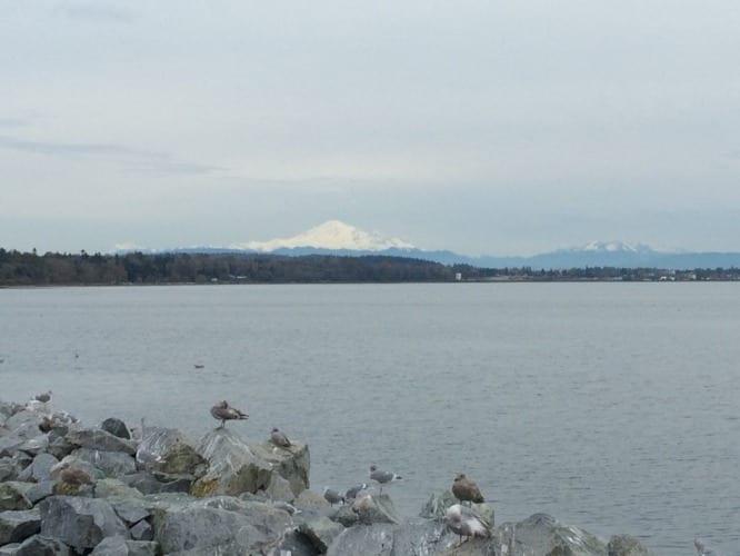 Mount Baker im Hintergrund