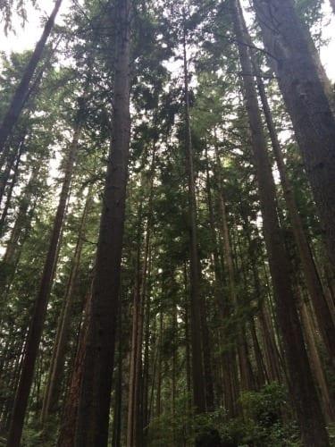 Extrem hohe Bäume