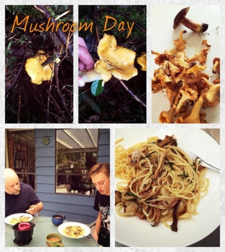 What a mushroom day