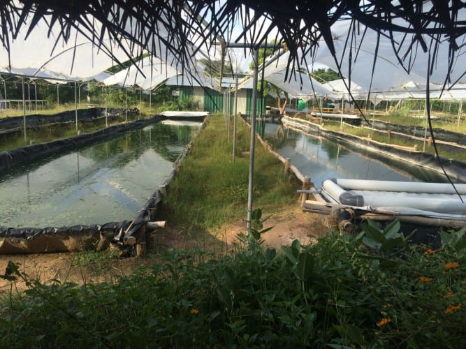 Spirolina Farm