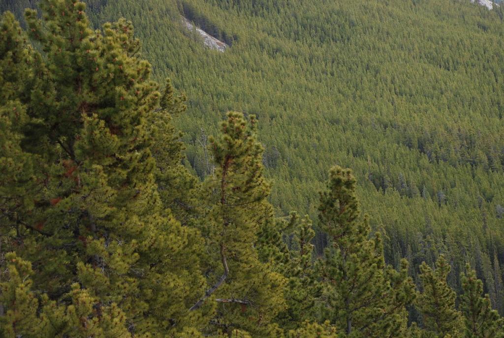 Viel Wald