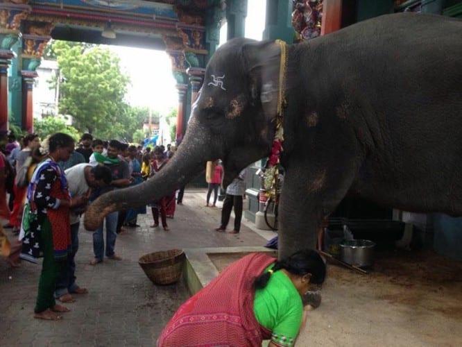 Elefant vor dem Tempel