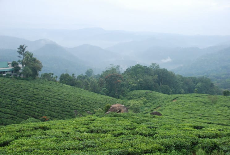 Teeplanatagen