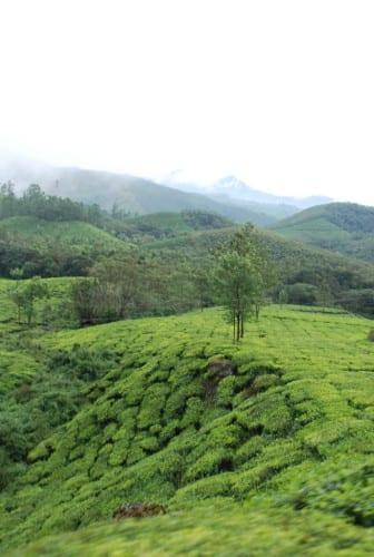 Munnar - Weg zum Nationalpark