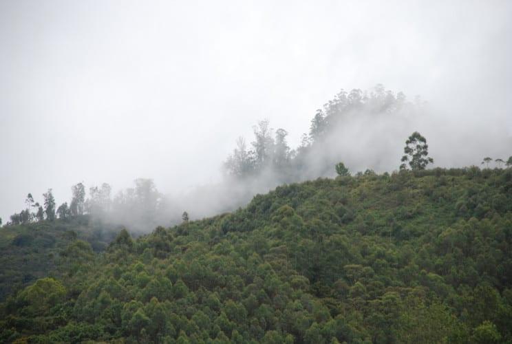 Nebel über Munnar