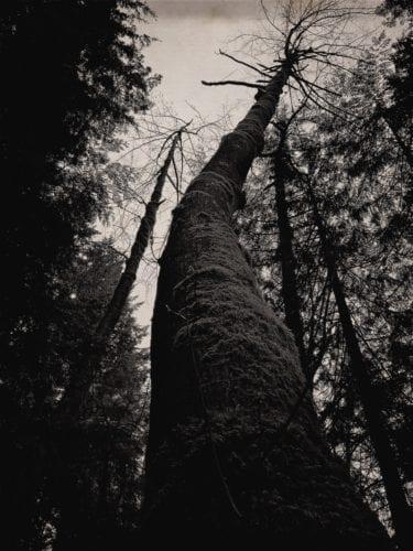 Regenwald-Urbäume