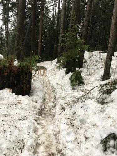 Winterlauf mit Hund