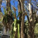 Kaktus aufm Baum