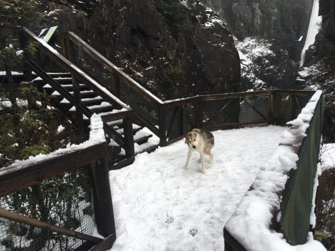 Ace verrückt im Schnee