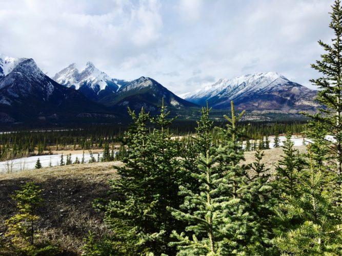 Trailrun in Jasper