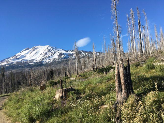 Mt Adams in der Ferne
