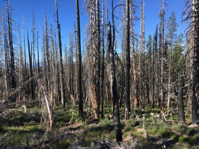 Hike durchs Waldbrandgebiet