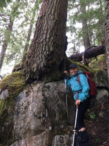 Baum auf Stein