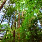 Grosse Bäume