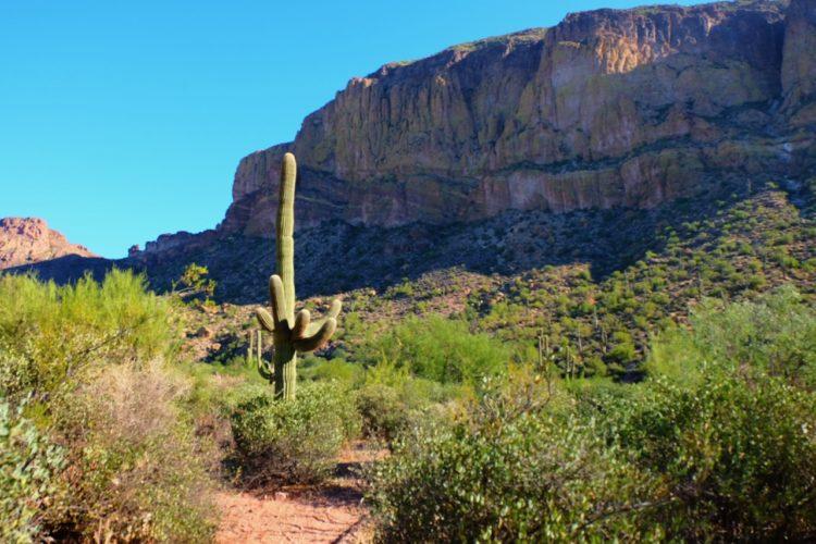 Riesen Kaktus