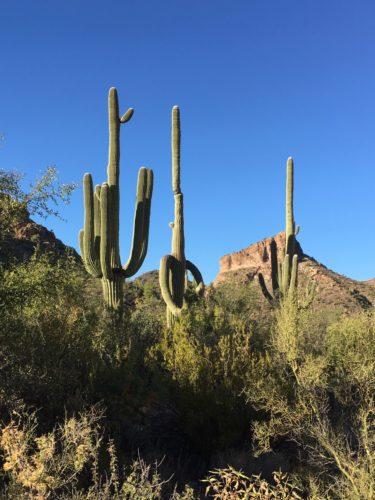 Cowboy Kaktus