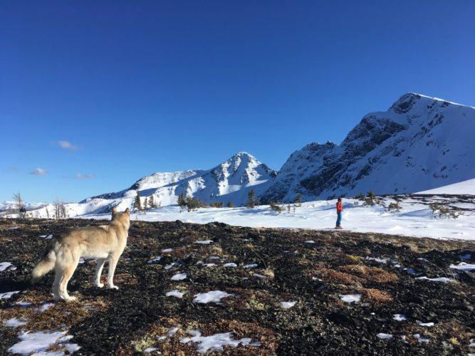 Panorama mit Hund